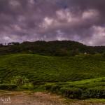 landscape, travel, wildlife, cat, Malaysia, Cameron Highlands