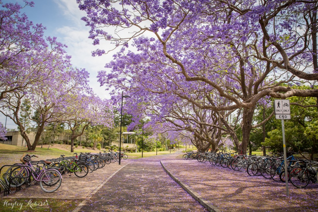 Brisbane, UQ