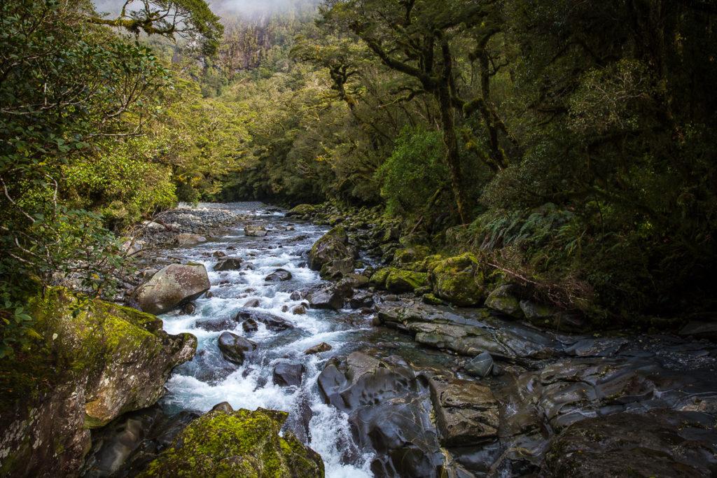 rainforest, chasm, milford sound, waterfall