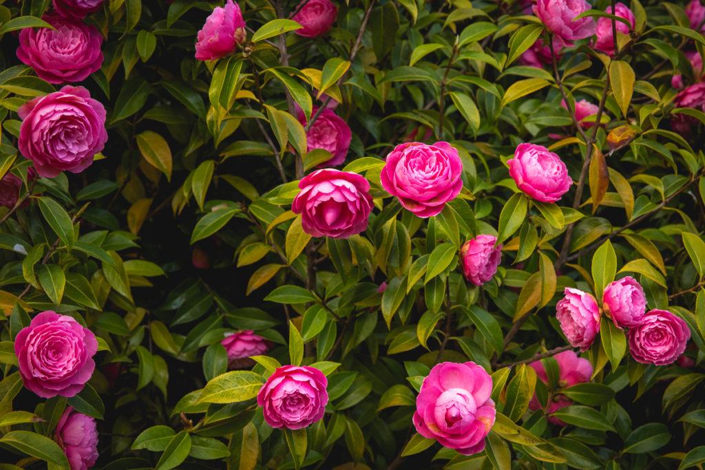 flowers, queenstown
