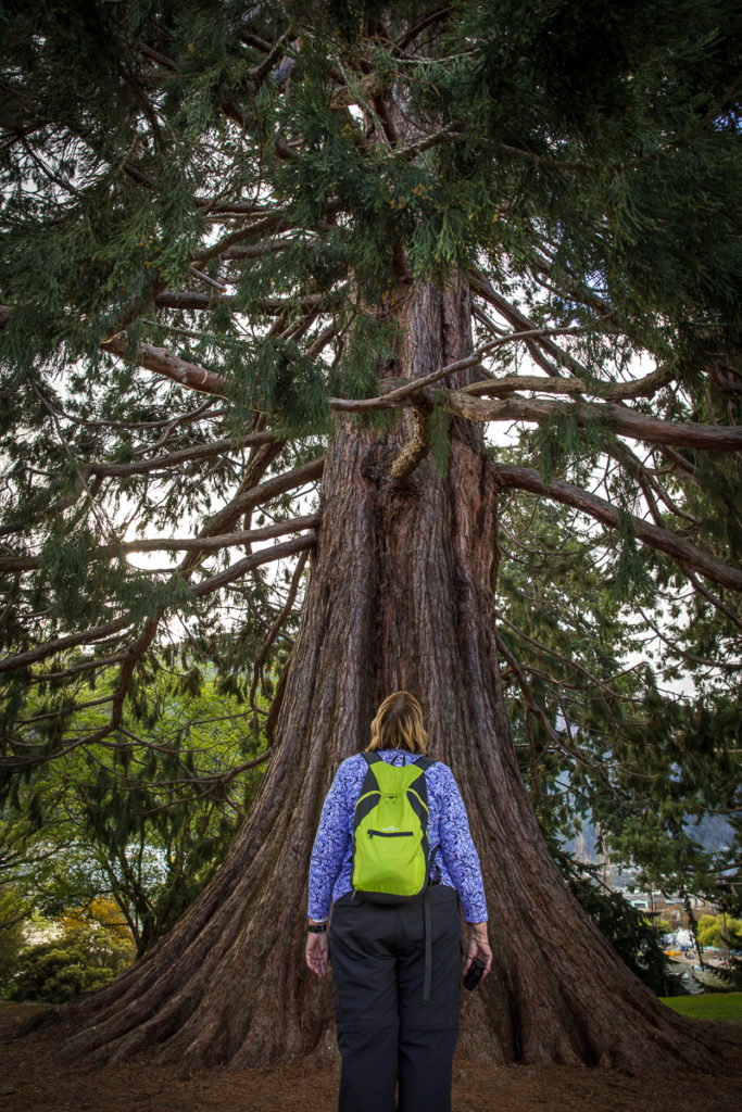 woman looks up at large tree
