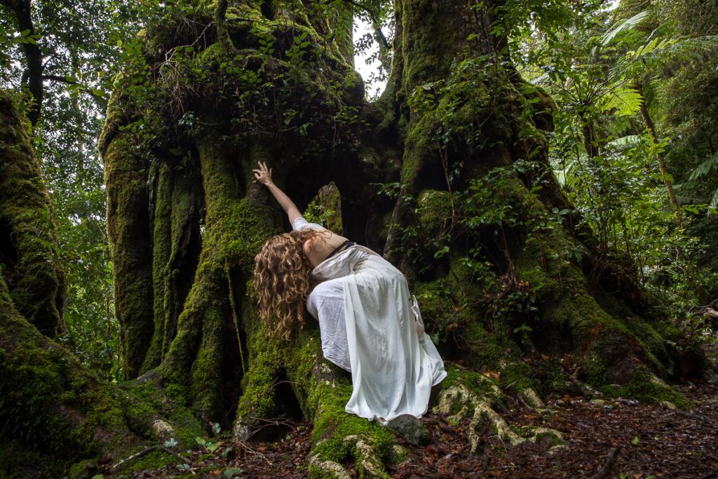 antarctic beech, tree, lamington national park, o'reilly's, photography, moss, green, forest, rainforest