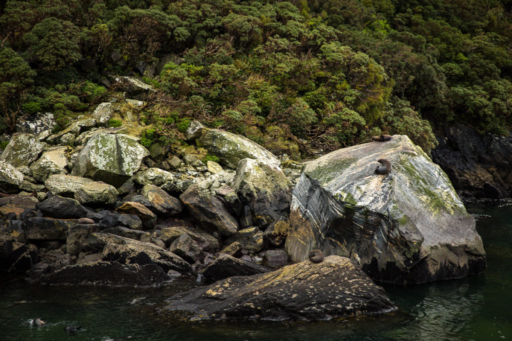 milford sound, seal