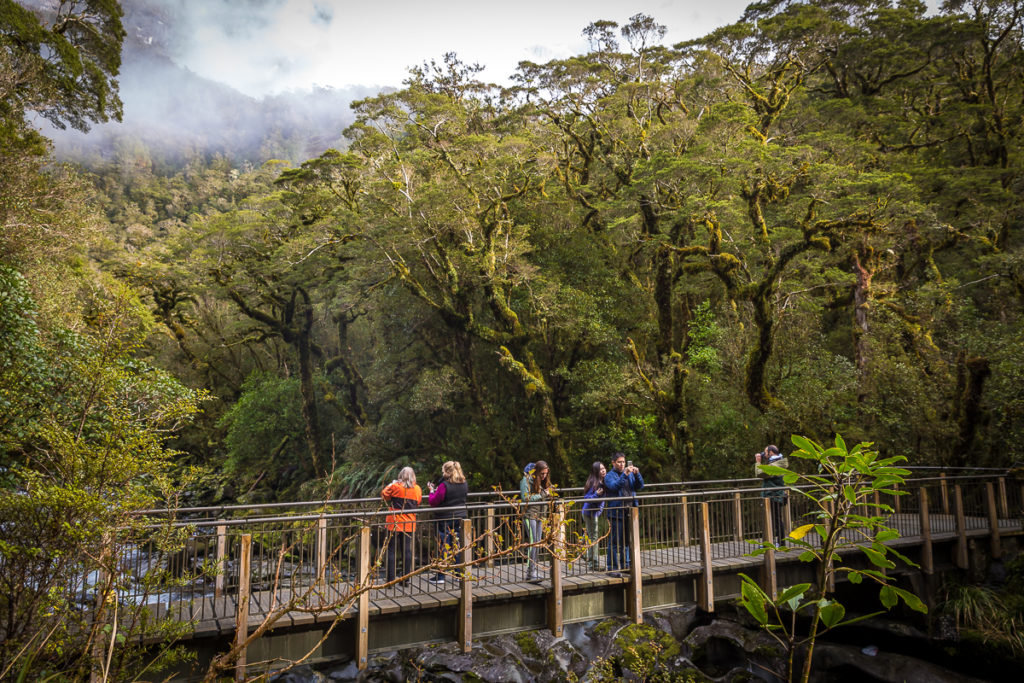 rainforest, chasm, milford sound