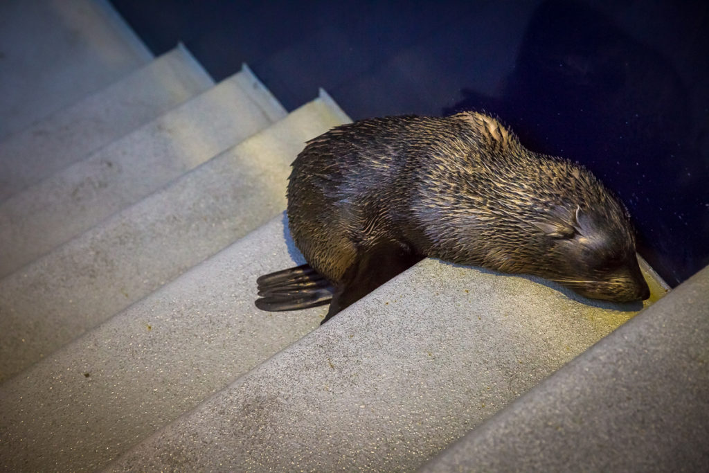 baby seal asleep on stairs